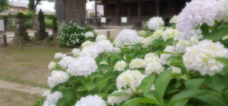 朝のお念仏の会 Temple Morning